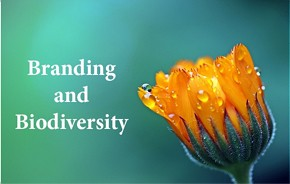 Beauty of Sourcing with Respect conference 2018: 
