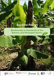 Baselinereport - Biodiversity in Standards of the Banana and Pineapple Sector