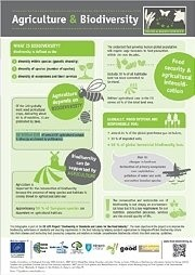 Fact Sheet: Agriculture & Biodiversity