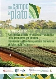 Del Campo al Plato: Recommendations for the Banana and Pineapple Sector