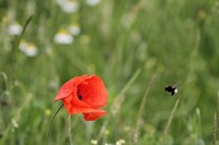 EU initiative for wild pollinating insects: Measures necessary to combat the causes